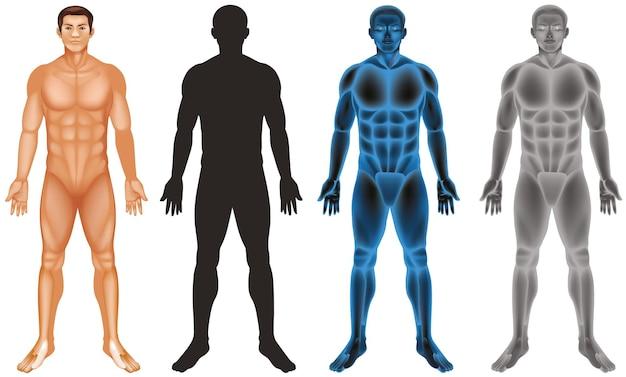 Homem e corpo diferente em fundo branco