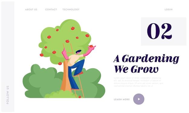 Homem fazendeiro escolhe maçãs para a cesta. personagem de jardineiro masculino colhendo frutas maduras de árvore orgânica no jardim, página de destino do site de nutrição saudável, página da web.