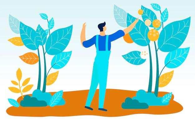 Homem no trabalho uniforme rasga frutos de arbustos altos