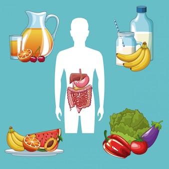 Homem, silueta, com, sistema digestivo