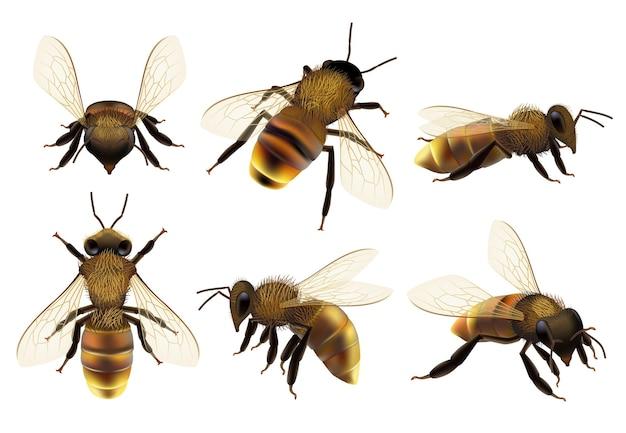 Honeybee realista. diferentes insetos de perigo de vida selvagem voando fotos de closeup de fauna botânica natural de vespa de abelha.