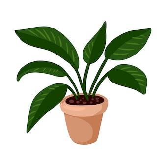 Hygge em vaso planta monstera