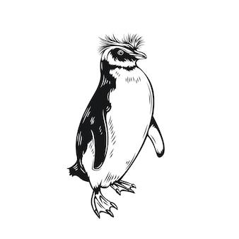 Ícone de contorno do pinguim. aves aquáticas que não voam para ilustração de zoológico.