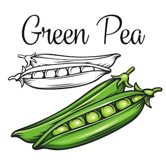 Ícone de desenho de ervilha verde