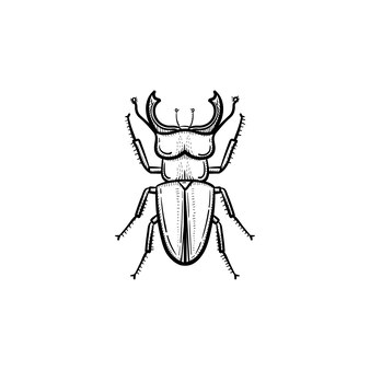 Ícone de doodle de contorno de besouro de vetor mão desenhada. ilustração do esboço do besouro para impressão, web, mobile e infográficos isolados no fundo branco.