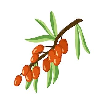 Ícone de espinheiro-mar uma fonte de vitamina c pequenas bagas de laranja úteis em um galho com uma folha de verão ou outono colheita na ilustração do jardim