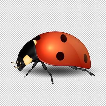 Ícone de inseto realista joaninha close-up. modelo de símbolo da primavera.