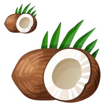 Ícone de vetor detalhado de coco isolado no branco