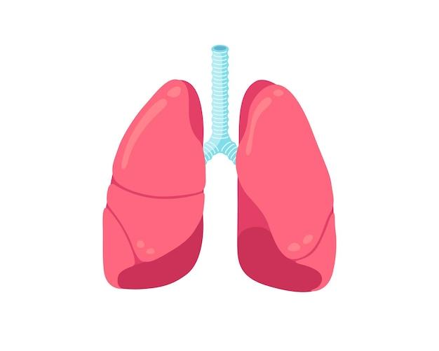 Ícone plano de pulmões sistema respiratório humano órgão interno saudável saúde medicina vetor de anatomia