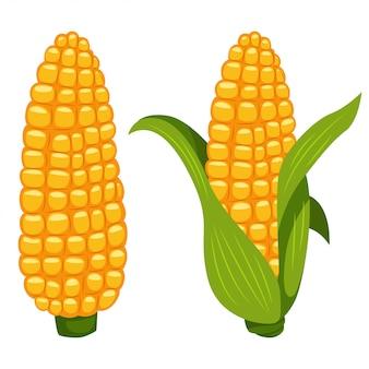 Ícone vegetal liso dos desenhos animados do vetor das espigas de milho isolado no fundo branco.