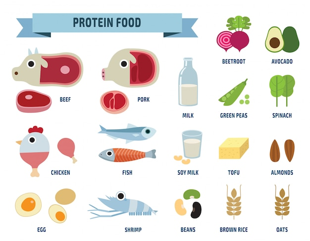 Ícones de comida de proteína isolados no branco