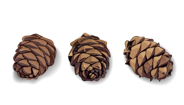 Ícones de cone definidos para seu projeto. pinha. pinha. cone de abeto. cone de abeto.