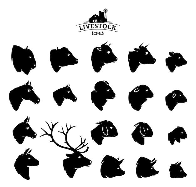 Ícones de gado isolados em branco