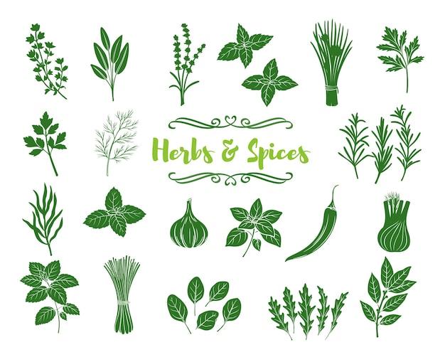 Ícones de glifo de ervas e especiarias. silhuetas de ervas culinárias populares, ilustração de impressão de selo.