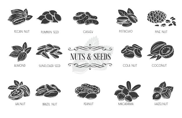 Ícones de glifo de nozes e sementes. noz de cola, semente de abóbora, sementes de amendoim e girassol.