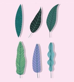 Ícones de natureza botanical de folhagem de folhas tropicais diferentes