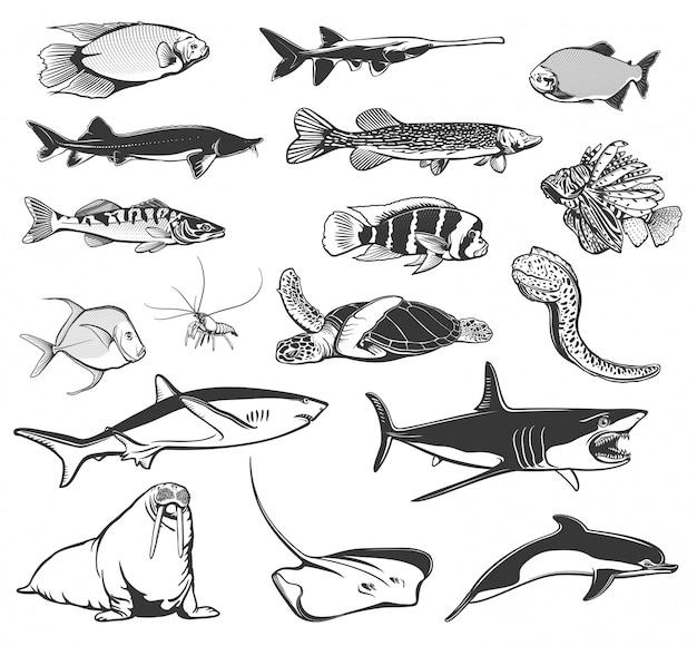 Ícones de peixes marinhos e animais do oceano