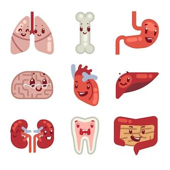 Ícones de vetor de órgãos internos de bonito dos desenhos animados