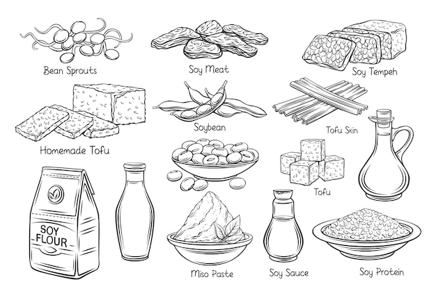 Ícones do vetor de contorno de produtos de soja. rebentos de soja monocromáticos desenhados, pele de tofu, leite de soja coagulado, soja, tempeh, missô, farinha e ets.