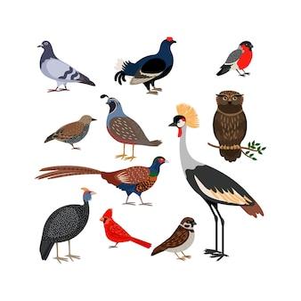 Ícones isolados de pássaro de vetor