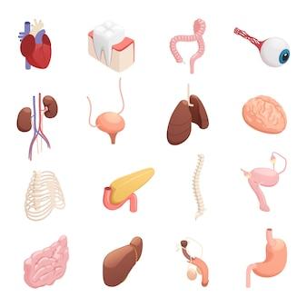 Ícones isométricos de órgãos humanos
