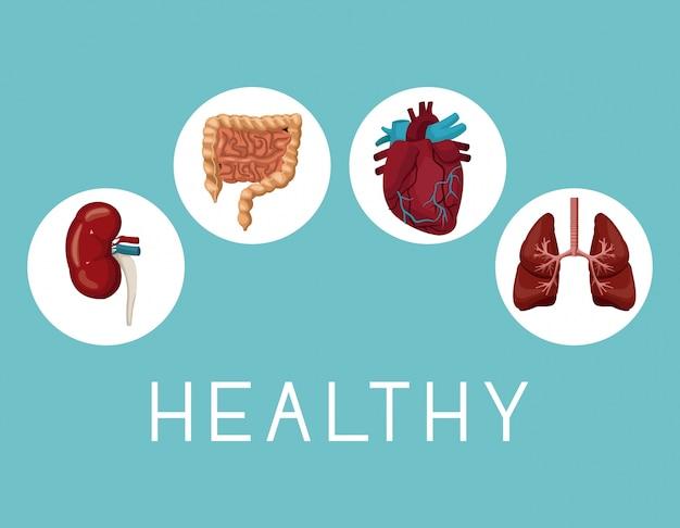 Ícones quadro circular órgãos internos corpo humano texto saudável