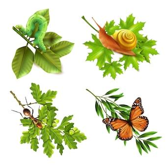 Ícones realistas de insetos