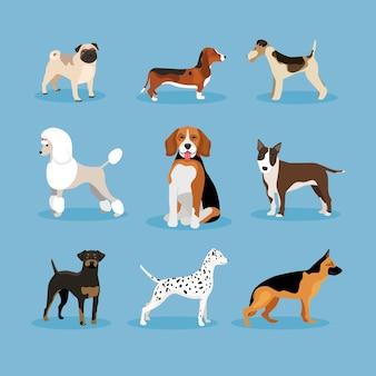 Ícones vetoriais conjunto de cães isolados em fundo azul