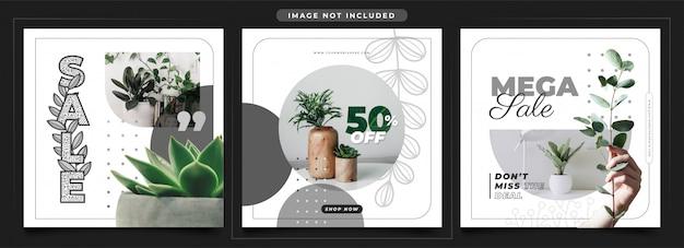 Ig post feeds - promoção de venda de plantas