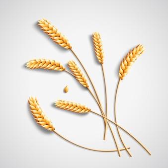 Ilustração 3d de trigo dourado em fundo cinza claro
