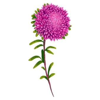 Ilustração aster roxa flor bordô linda em um buquê