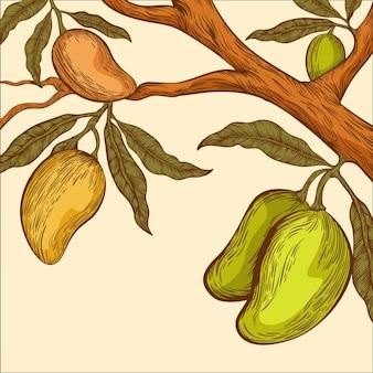 Ilustração botânica de galho de árvore de manga desenhada à mão