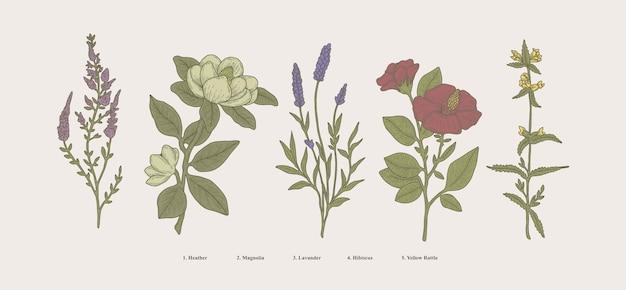 Ilustração botânica desenhada à mão vintage, plantas científicas, flores e ervas naturais isoladas