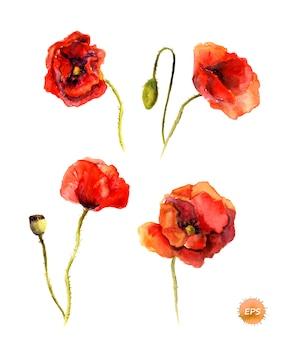Ilustração botânica em aquarela em branco