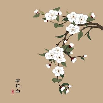 Ilustração chinesa retro colorida com flor de pêra branca