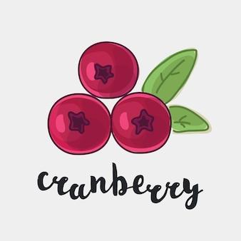 Ilustração colorida de cranberry com tinta e nome escrito à mão em inglês em fundo branco isolado