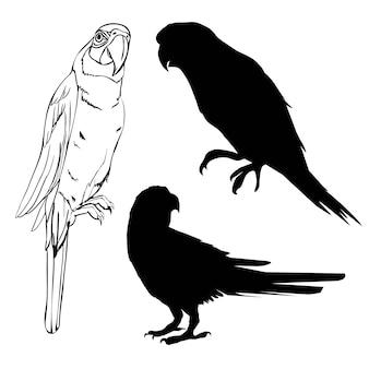 Ilustração com coleção de silhuetas de papagaio isolada