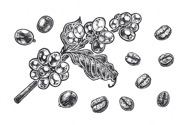Ilustração com grãos de café.