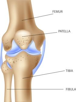 Ilustração da anatomia humana da articulação do joelho
