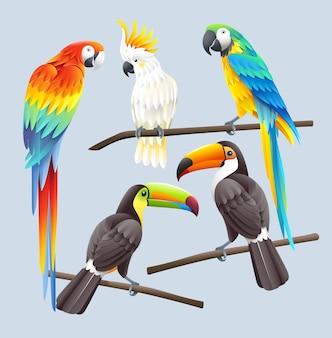 Ilustração da arara vermelha, arara azul, cacatua branca e dois tucanos toco