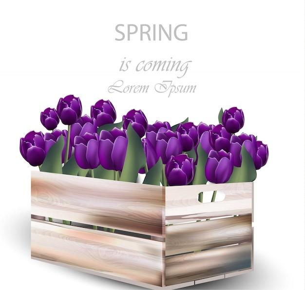 Ilustração da caixa da flor da tulipa violeta