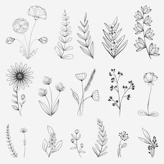 Ilustração da coleção de flores desenhada à mão