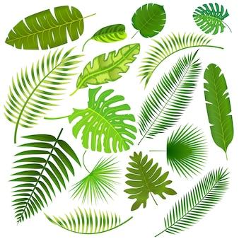 Ilustração da coleção de folhas tropicais