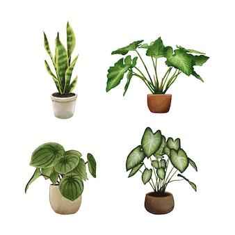 Ilustração da coleção do conjunto de plantas desenhadas à mão