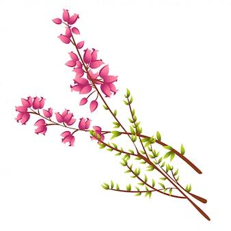 Ilustração da ilustração de calluna vulgaris ou heather