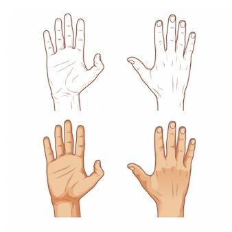Ilustração da mão - frente e verso da mão