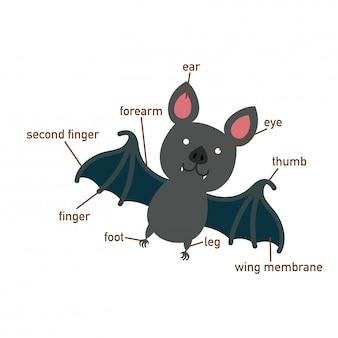 Ilustração da parte de vocabulário de morcego do corpo