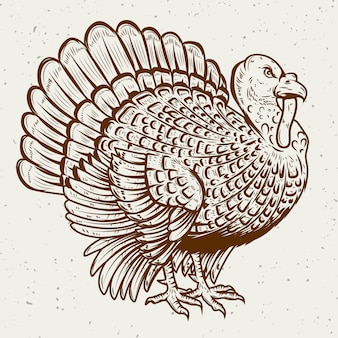 Ilustração da turquia em fundo branco. tema de ação de graças. elemento para cartaz, cartão de felicitações. ilustração