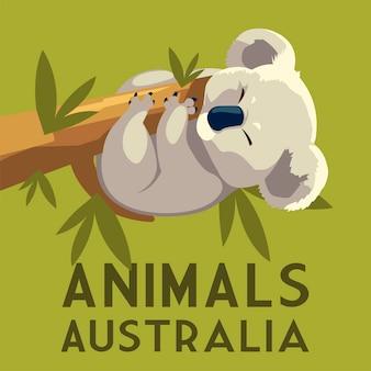 Ilustração da vida selvagem animal australiano com galho pendurado coala eucalipto