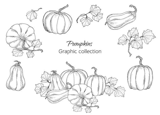 Ilustração de abóboras de outono